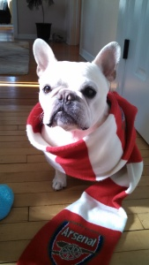 braxton in scarf