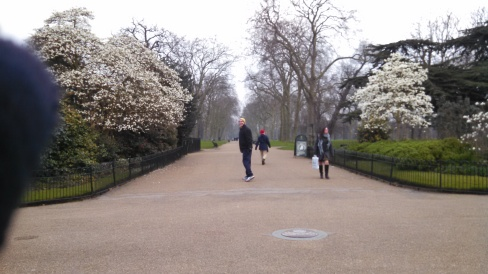 Hyde Park flowering