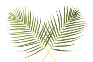 palm-sunday-global